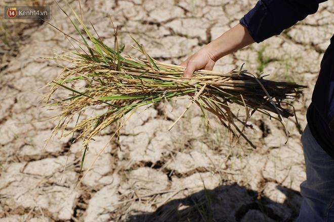 Người miền Tây bên những cánh đồng nứt toác vì hạn mặn: Lúa trồng xuống là chết, nước sông mặn đắng cả rồi! - ảnh 18