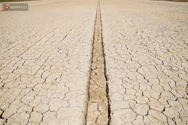 Người miền Tây bên những cánh đồng nứt toác vì hạn mặn: Lúa trồng xuống là chết, nước sông mặn đắng cả rồi! - ảnh 2