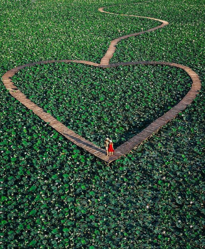 Khách quốc tế phát cuồng trước cảnh hoa sen bạt ngàn ở nơi này của Việt Nam 001