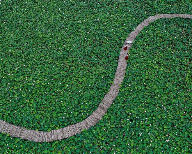 Khách quốc tế phát cuồng trước cảnh hoa sen bạt ngàn ở nơi này của Việt Nam 002