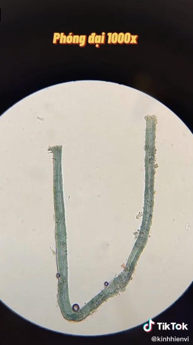 Chuyên gia nói gì về clip sự thật khi soi nước mắm dưới kính hiển vi và 4 lưu ý khi người Việt dùng nước mắm để không ảnh hưởng sức khỏe - ảnh 4