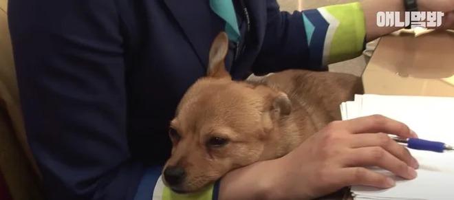 Chú chó mê gái khét tiếng ở sân bay Hàn Quốc: Thấy tiếp viên nữ là sấn sổ bổ nhào, gặp tiếp viên nam thì thờ ơ tránh né - Ảnh 8.
