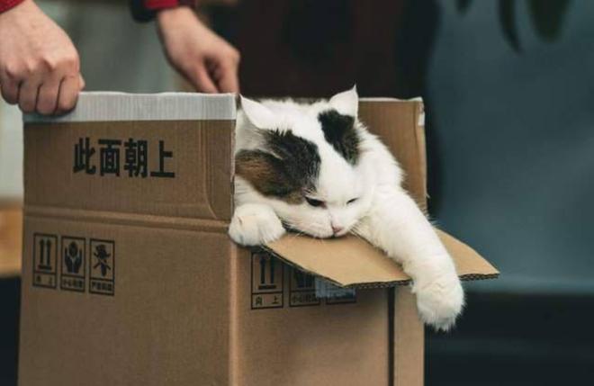 Trào lưu chốt đơn thú cưng qua mạng của giới trẻ Trung Quốc và những pha ship hàng đi thẳng xuống địa ngục của các chủ shop vô tâm - ảnh 6