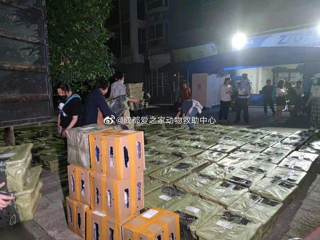 Trào lưu chốt đơn thú cưng qua mạng của giới trẻ Trung Quốc và những pha ship hàng đi thẳng xuống địa ngục của các chủ shop vô tâm - ảnh 7