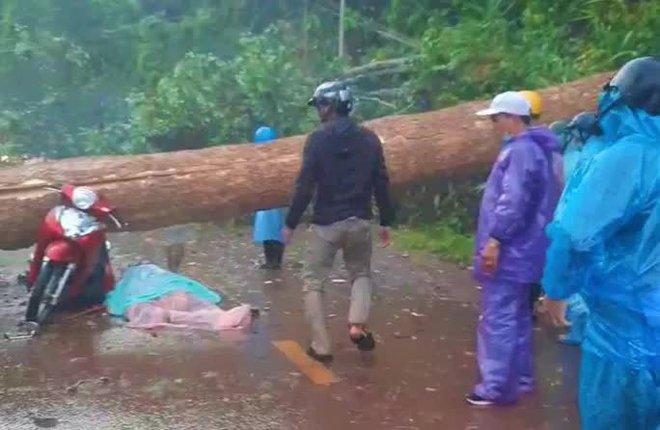 Mưa lớn kèm giông lốc quật cây rừng ngã đổ, đè 2 phụ nữ thương vong - ảnh 1