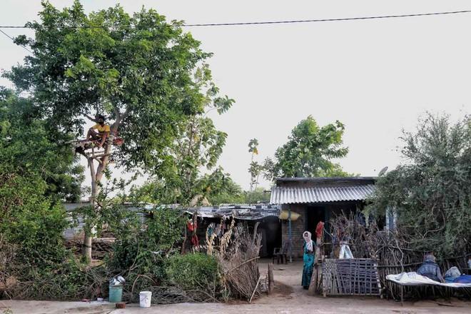 Thiếu hụt cơ sở y tế, chàng trai Ấn Độ trèo trên cây để cách ly sau khi biết mình nhiễm COVID-19 - ảnh 2