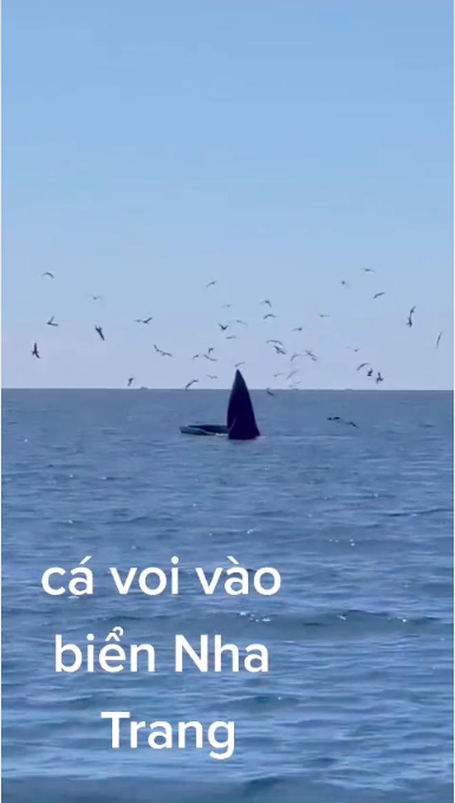 """HOT: Ngư dân ghi lại cảnh cá voi """"siêu to khổng lồ"""" xuất hiện ở vùng biển Nha Trang, quả là may mắn lắm mới được chứng kiến - Ảnh 3."""