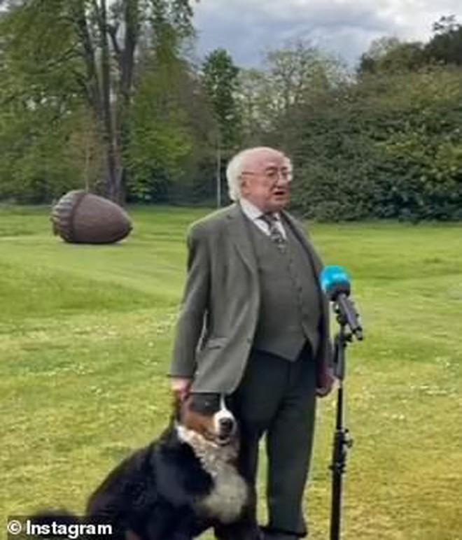 Chó cưng của Tổng thống Ireland càn quét MXH vì màn phá rối chủ đáng yêu hết sức ngay trên sóng trực tiếp - ảnh 2