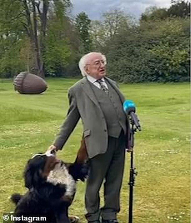 Chó cưng của Tổng thống Ireland càn quét MXH vì màn phá rối chủ đáng yêu hết sức ngay trên sóng trực tiếp - ảnh 1
