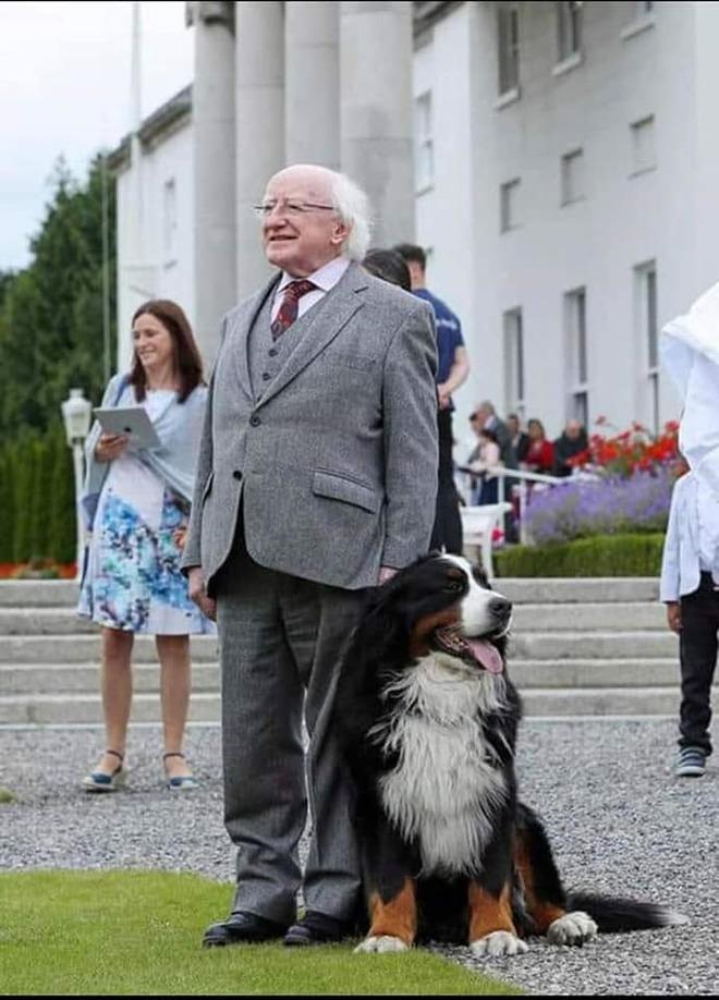 Chó cưng của Tổng thống Ireland càn quét MXH vì màn phá rối chủ đáng yêu hết sức ngay trên sóng trực tiếp - ảnh 9
