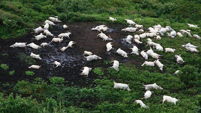 Chiếc hồ thảm sát: Chỉ sau 1 đêm mà cả nghìn người lẫn động vật xung quanh cái hồ này chết hàng loạt, chuyện gì đã xảy ra? - ảnh 2