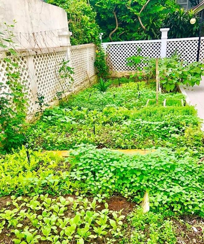 Sống giữa khu nhà giàu mà Thuỷ Tiên vẫn có vườn rau rộng 100m2: Không cần đi chợ vì quá sum suê, rau gì cũng có! - Ảnh 5.