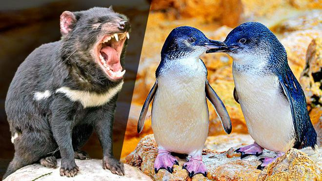 Hơn 6000 con chim cánh cụt bị quét sạch tại một hòn đảo vì sự xuất hiện của một con quỷ - ảnh 3
