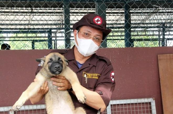 """Campuchia sẽ dùng chó """"đánh hơi"""" tìm người mắc Covid-19 - ảnh 1"""