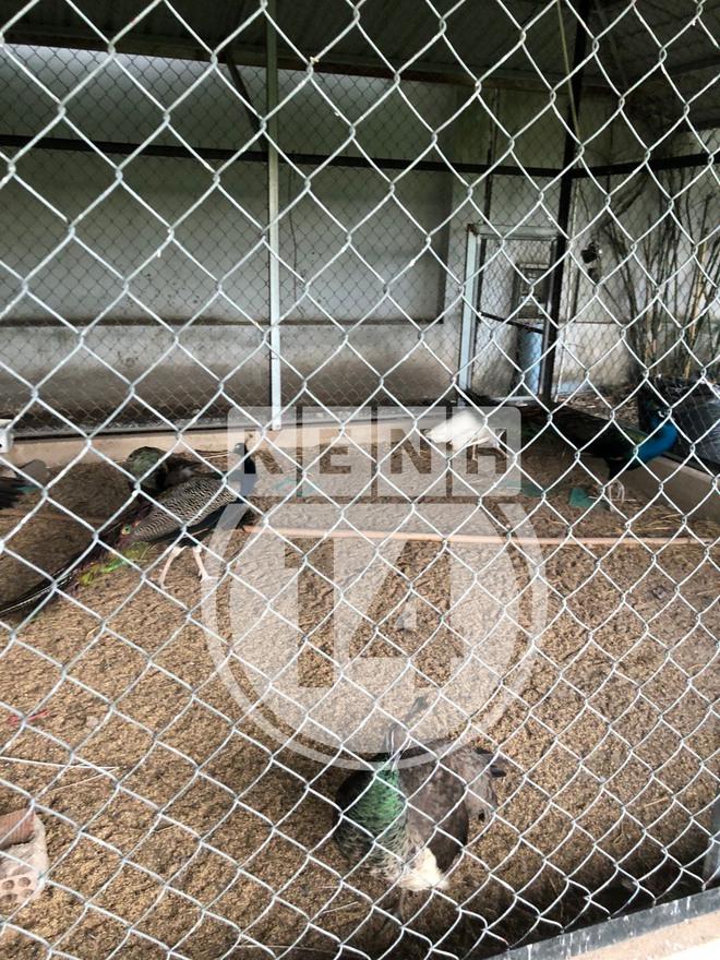 """Về thăm """"Đền thờ Tổ nghiệp"""" của NS Hoài Linh sau loạt lùm xùm từ thiện: Camera bố trí dày đặc, hàng xóm kể """"không bao giờ thấy mặt"""" - Ảnh 17."""