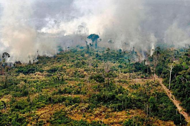 Tin rất buồn: Rừng Amazon chạm đến điểm cực hạn, đang phát thải CO2 còn nhiều hơn khả năng hấp thụ - ảnh 3