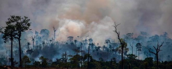 Tin rất buồn: Rừng Amazon chạm đến điểm cực hạn, đang phát thải CO2 còn nhiều hơn khả năng hấp thụ - ảnh 1