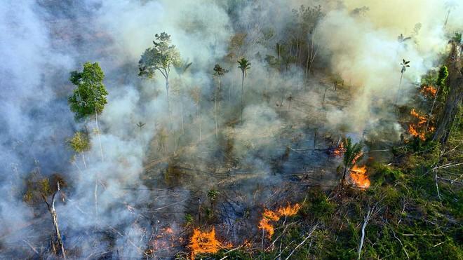 Tin rất buồn: Rừng Amazon chạm đến điểm cực hạn, đang phát thải CO2 còn nhiều hơn khả năng hấp thụ - ảnh 4
