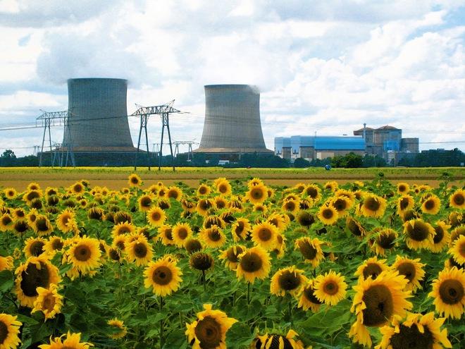 Đồng hoa hướng dương khổng lồ mọc lên ngay cạnh nhà máy Fukushima sau thảm họa hạt nhân chết chóc nhất lịch sử: Chuyện bí ẩn gì đây? - ảnh 2