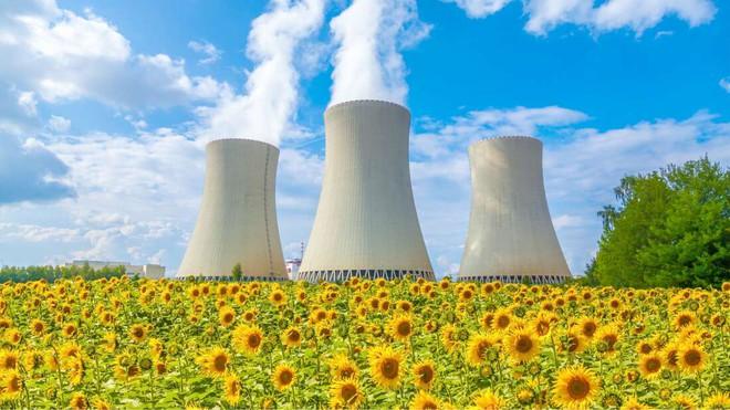 Đồng hoa hướng dương khổng lồ mọc lên ngay cạnh nhà máy Fukushima sau thảm họa hạt nhân chết chóc nhất lịch sử: Chuyện bí ẩn gì đây? - ảnh 4