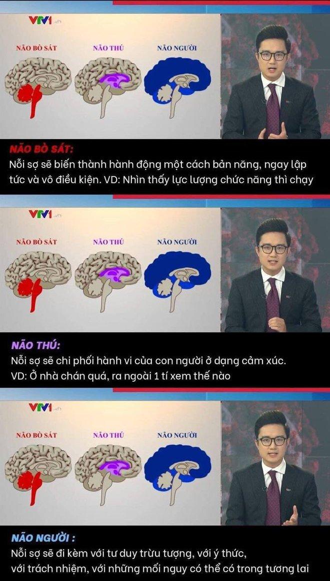 Dân mạng tranh cãi về bản tin ví von não người - não thú của VTV: Đúng tinh thần nhưng sai cách thể hiện - ảnh 3