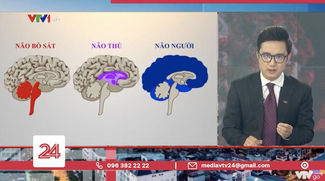 Tranh cãi BTV của VTV ví von não người - não thú để cà khịa những trường hợp vi phạm quy định giãn cách - ảnh 3