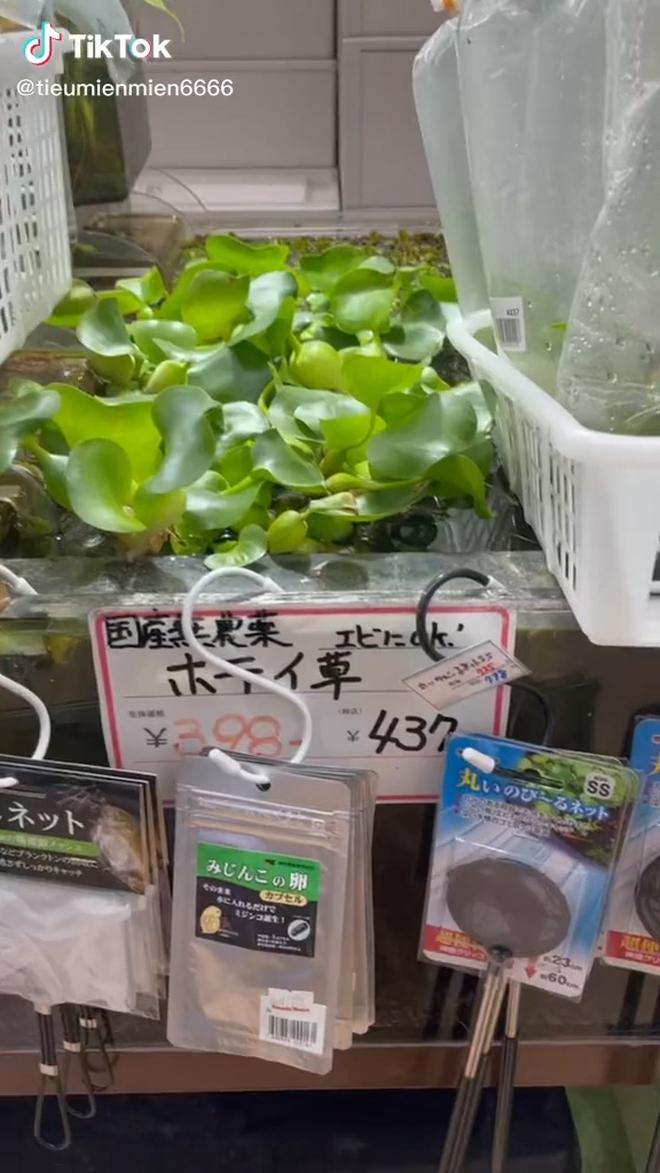 """Những thứ ở Việt Nam chỉ cho gà ăn mà sang Nhật giá cực đắt khiến dân mạng xôn xao: """"Thế này thì nhà mình giàu to rồi""""! - Ảnh 1."""
