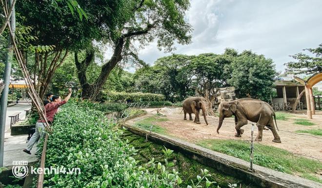 Thảo Cầm Viên Sài Gòn kêu cứu, xin hỗ trợ hơn 30 tỷ đồng để chăm sóc bầy thú - ảnh 2
