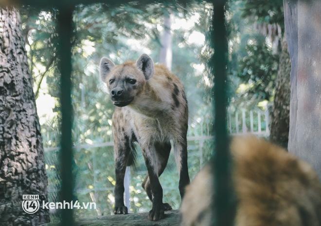 Chuyện 34 nhân viên ở lại Thảo Cầm Viên chăm sóc bầy thú giữa dịch Covid-19: Phải cố gắng không để thú nuôi bị đói - ảnh 13
