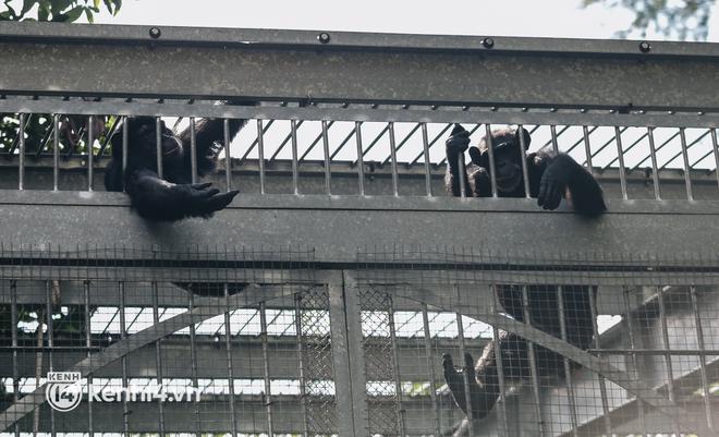 Chuyện 34 nhân viên ở lại Thảo Cầm Viên chăm sóc bầy thú giữa dịch Covid-19: Phải cố gắng không để thú nuôi bị đói - ảnh 7