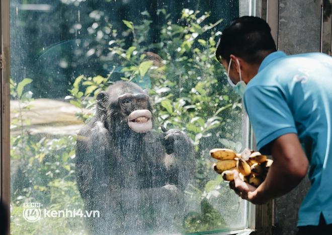Chuyện 34 nhân viên ở lại Thảo Cầm Viên chăm sóc bầy thú giữa dịch Covid-19: Phải cố gắng không để thú nuôi bị đói - ảnh 9