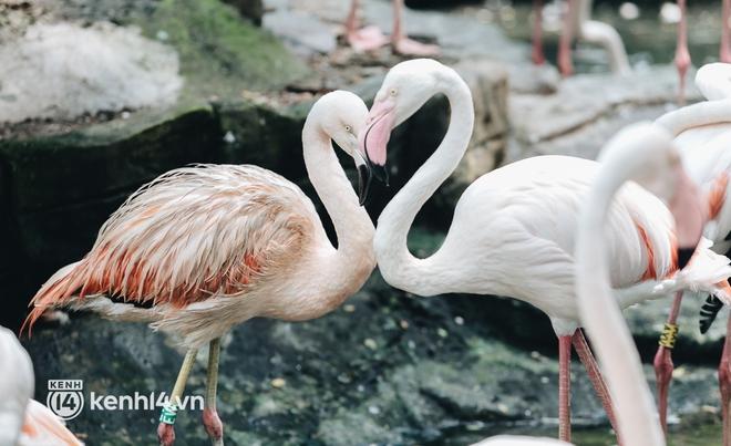 Chuyện 34 nhân viên ở lại Thảo Cầm Viên chăm sóc bầy thú giữa dịch Covid-19: Phải cố gắng không để thú nuôi bị đói - ảnh 11