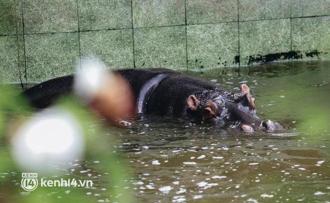 Chuyện 34 nhân viên ở lại Thảo Cầm Viên chăm sóc bầy thú giữa dịch Covid-19: Phải cố gắng không để thú nuôi bị đói - ảnh 18