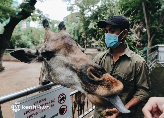 Chuyện 34 nhân viên ở lại Thảo Cầm Viên chăm sóc bầy thú giữa dịch Covid-19: Phải cố gắng không để thú nuôi bị đói - ảnh 23