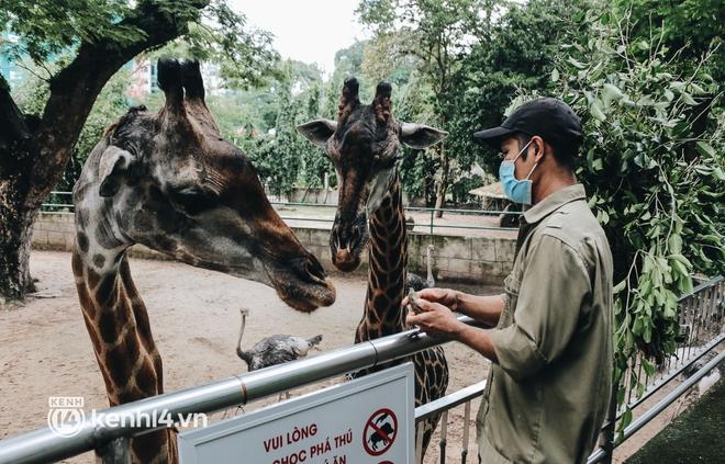 Chuyện 34 nhân viên ở lại Thảo Cầm Viên chăm sóc bầy thú giữa dịch Covid-19: Phải cố gắng không để thú nuôi bị đói - ảnh 24