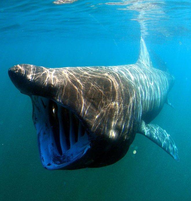 8 loài vật có vẻ ngoài lừa đảo nhất: Trông nguy hiểm mà hiền khô, bất ngờ nhất là loài cuối cùng - Ảnh 1.