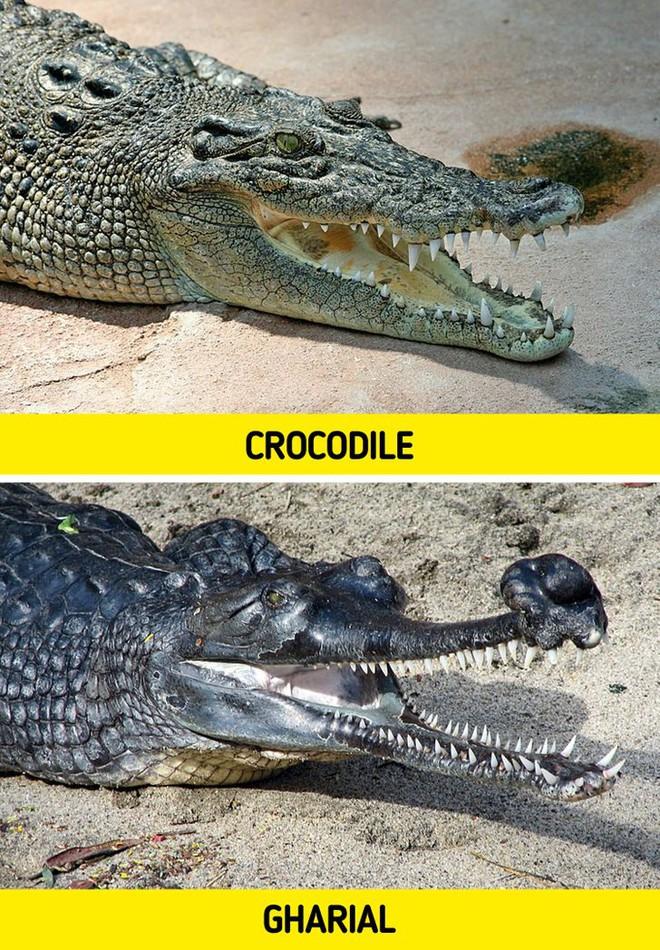 8 loài vật có vẻ ngoài lừa đảo nhất: Trông nguy hiểm mà hiền khô, bất ngờ nhất là loài cuối cùng - Ảnh 8.