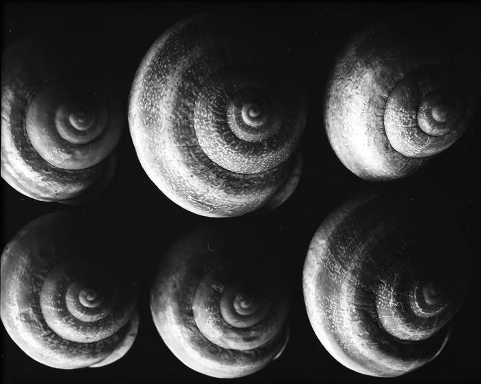 Large Format:  Ông tổ của ngành nhiếp ảnh hiện đại và những tấm ảnh có thể to như bức tranh treo tường - Ảnh 5.