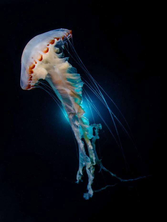 Như lạc vào thế giới khác với chùm ảnh đại dương đẹp nhất năm 2018 - Ảnh 25.