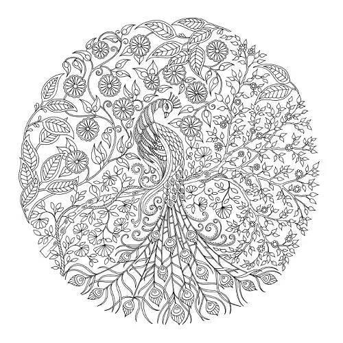 Nhung Buc Tranh Phac Hoa O Trong Secret Garden