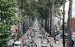 Sau vụ cây xanh bật gốc đè chết người: Vẫn còn nhiều cây đã già cỗi có rễ lộ thiên, nhánh vươn ra mặt đường ở Sài Gòn