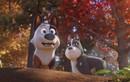 Thú Cưng Siêu Quậy – Chuyến phiêu lưu đáng yêu và giàu cảm xúc của cún cưng