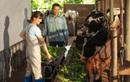 Theo chân nhiếp ảnh gia nổi tiếng: Bất ngờ trước nỗ lực sản xuất dòng sữa chuẩn Hà Lan của nhiều thế hệ nông dân Việt