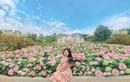 """Sau Sầm Sơn, dân tình rần rần chuẩn bị """"quẩy"""" cùng lễ hội hoa, đêm nhạc cực đỉnh ở Hạ Long"""