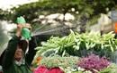 """Tháng 4 là lời hẹn ước: """"Hà Nội ơi, mình gặp nhau ngày hoa loa kèn nở"""""""