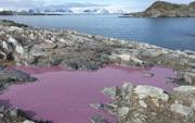 Ao nước giữa Nam Cực đột nhiên chuyển thành màu tím, khoa học bất ngờ và đến giờ vẫn chưa hiểu tại sao