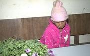 Phát hiện đối tượng 86 tuổi trồng thuốc phiện trên nương