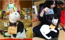 """Muốn biết mèo Nhật Bản """"quyền lực"""" ra sao, cứ đến ngôi đền """"Meo Meo Tự"""" nơi có trụ trì lẫn chú tiểu đều là… mèo!"""