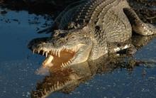 Bé 10 tuổi bị cá sấu cắn tử vong thương tâm trước mắt người thân