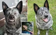 """Câu chuyện cảm động đằng sau những bức ảnh đáng yêu của chú chó """"hạnh phúc nhất thế giới"""""""